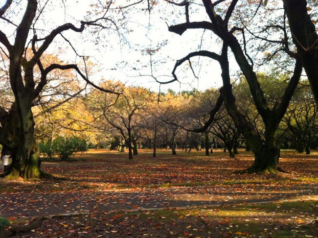 落ち葉の庭 新宿御苑にて