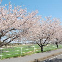 空と桜と緑