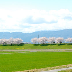 山の稜線と桜並木