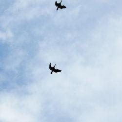 明け方に飛ぶ渡り鳥(キャンプ場にて)
