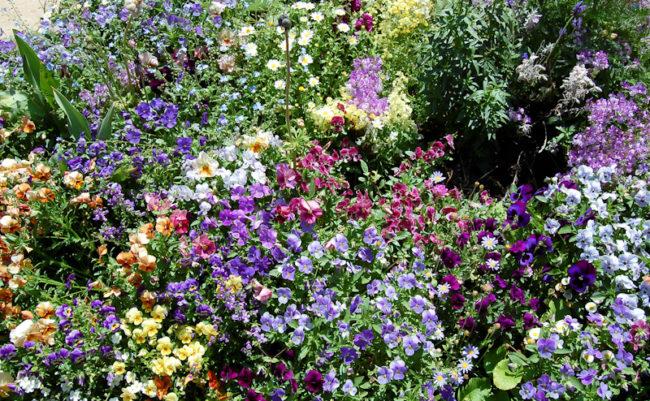 地中美術館前の花壇