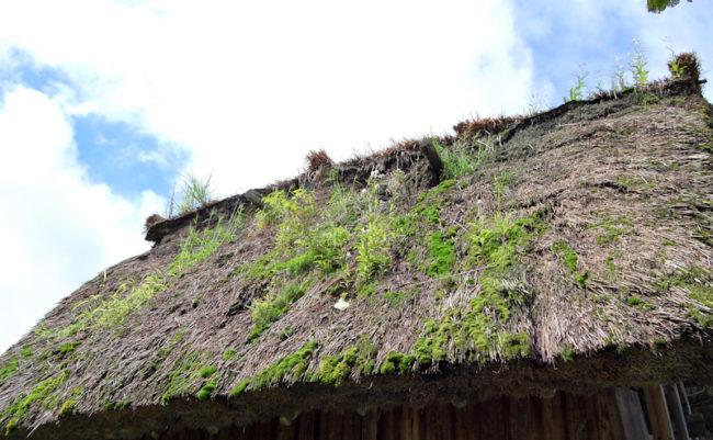 合掌造りの屋根