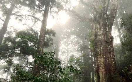 霧に包まれた奥の院